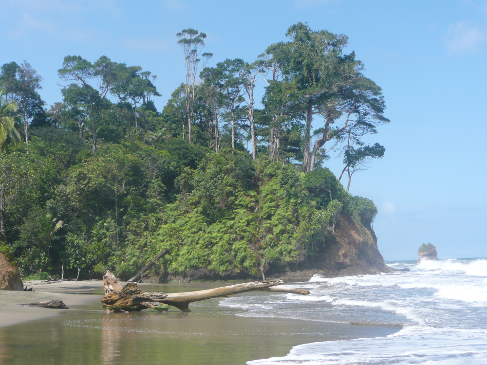Calovebora Panama 1