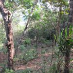 Lot in Cerro Redondo - near santa Fe veraguas Panama